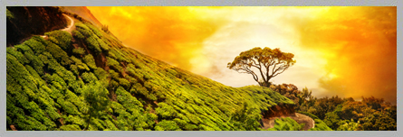 Hill Stations of Kerala | Kerala Hill Station Tours